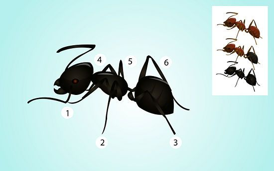 Kill Carpenter Ants | Science | Kill carpenter ants, Ants ...