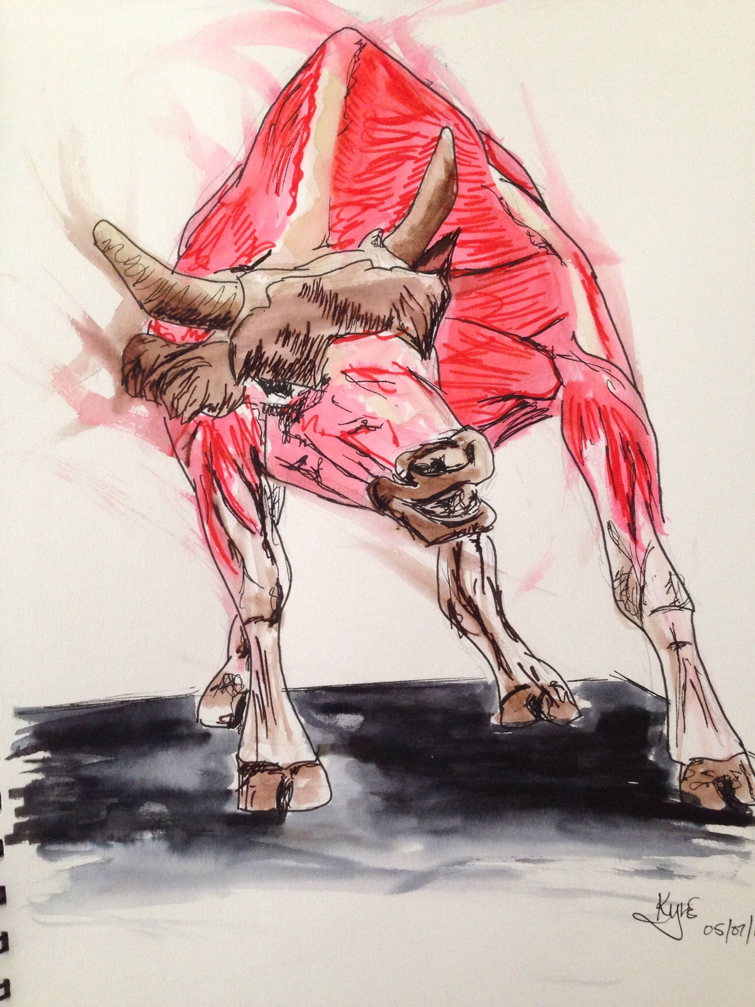 "Animal Anatomy - ""Bullish behaviour"" - Felt pen, fine line pen and water."