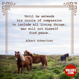 Share Love And Compassion With All Living Things #peace #love Www.values.  CompassionConnectionInspirational QuotesPeaceLife ...