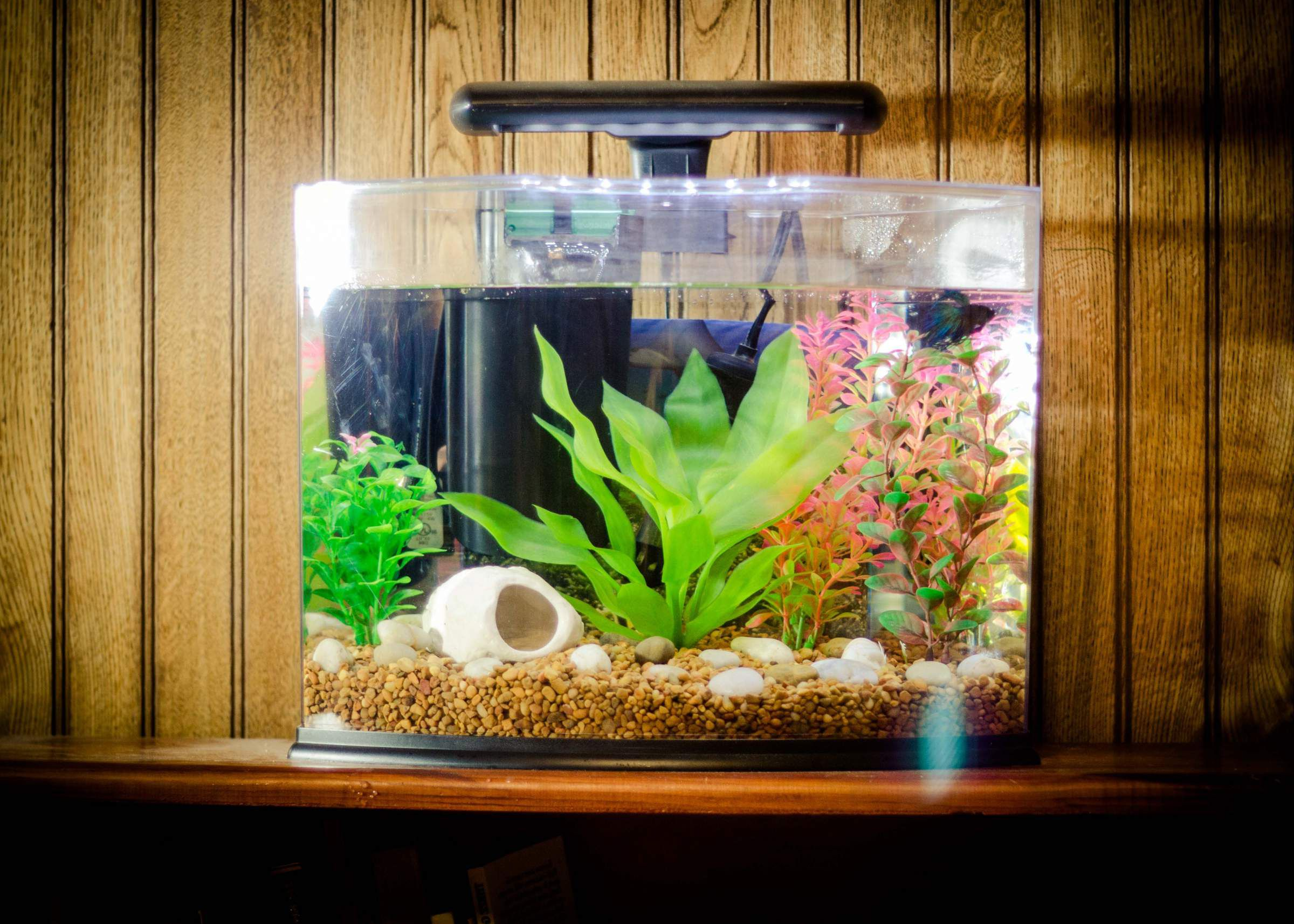 Small aquarium fish tanks - Small Fish Tank Decoration Ideas Http Www Lookmyhomes Com