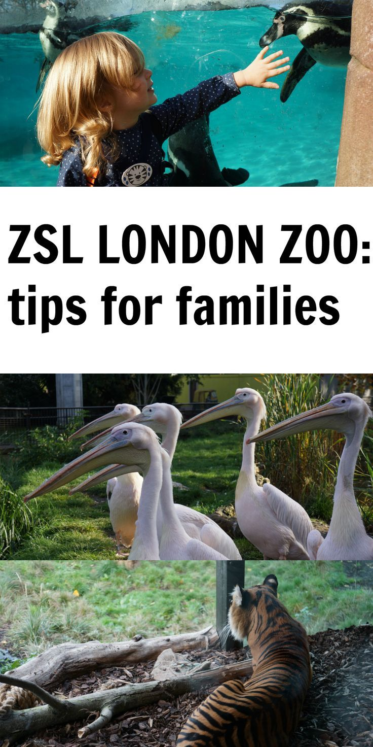 London with toddlers ZSL London Zoo London with