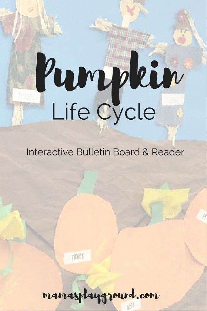 A Magic Pumpkin Patch #pumpkinpatchbulletinboard Create an interactive bulletin board to teach the life cycle of a pumpkin for Preschool, Kindergarten and First Grade.  The board goes hand in hand with the free printable pumpkin life cycle reader. #pumpkinpatchbulletinboard