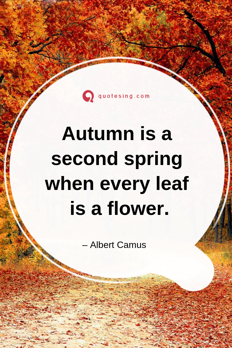 Autumn Evening Quotes Fall Winter Quotes Falling For You Quotes