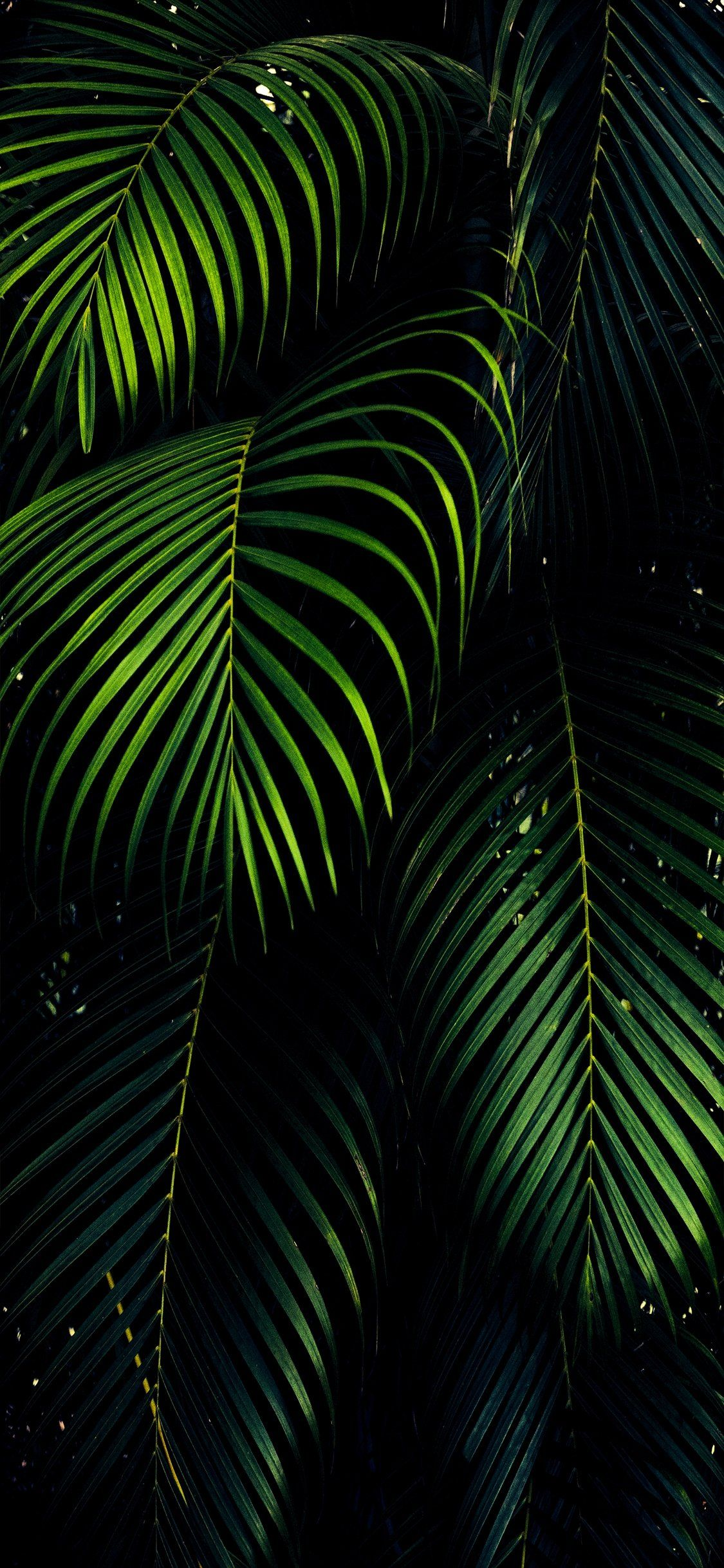 27 Oled Wallpaper Iphone 11 Pro Iphone Wallpaper Green Aesthetic Cool Wallpapers For Phones