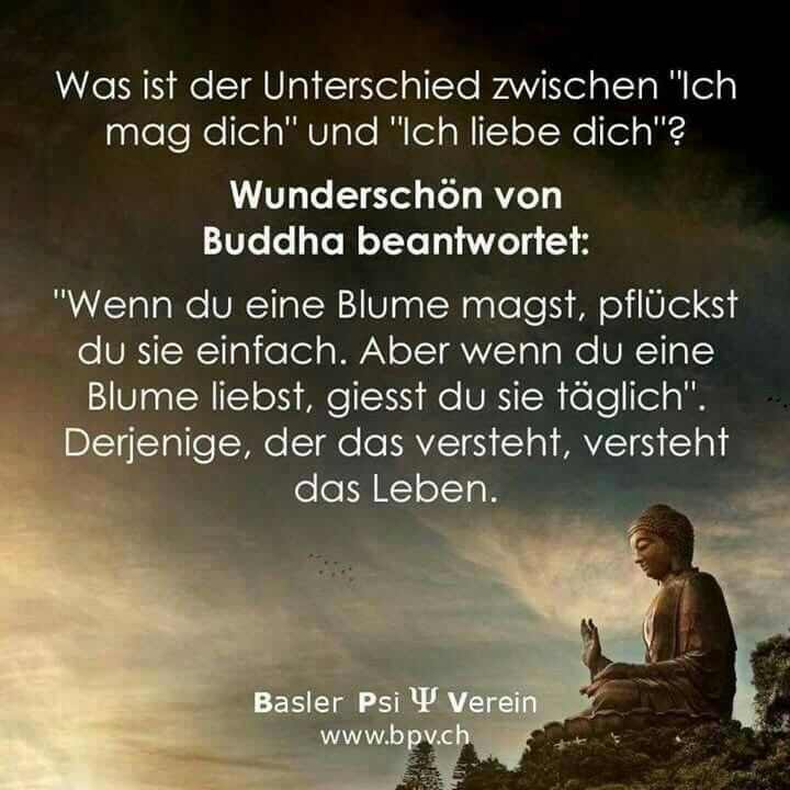 du magst mich nur  | love | Quotes, Quotations, Buddha quote