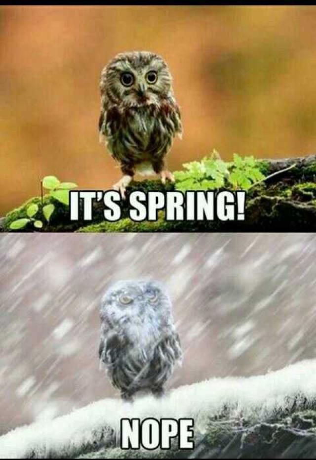 15 Funny Memes About Spring Funny Owls Funny Animals Funny Pictures
