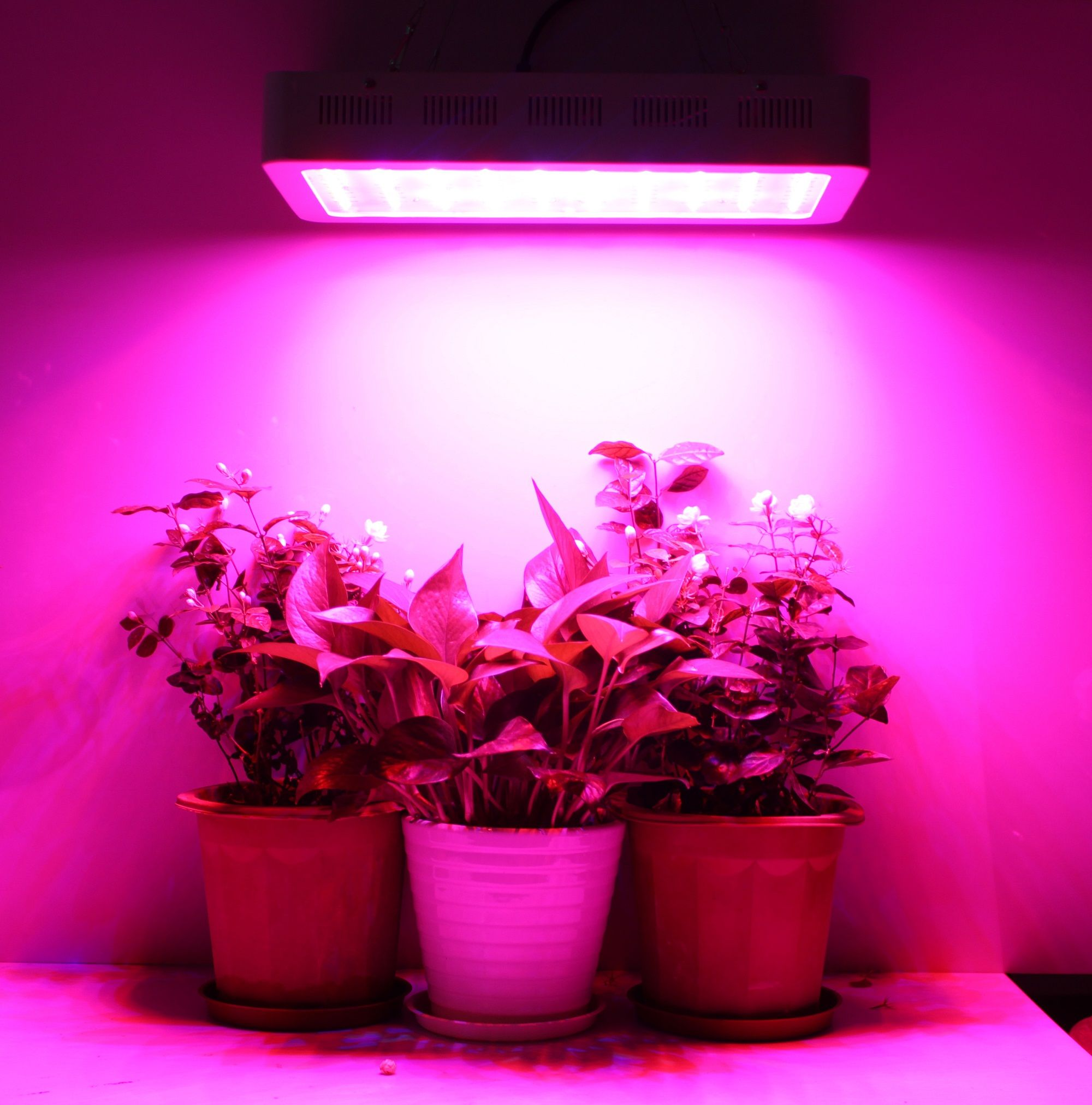 Wanna Your Plants Grow Quick And Well The Led Grow Light Is A Good Choice Led Pflanzenlampe Pflanzenlampe Pflanzenleuchte