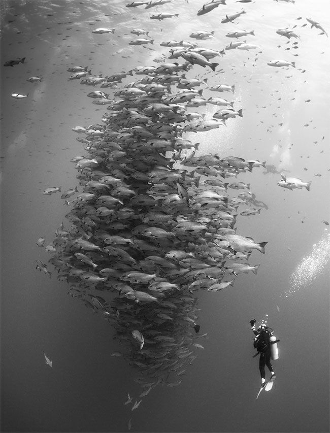 Black and white photograph by nadya kulagina the winning shot of 2014 underwater photography photo contest in wide angle divers category from nadya kulagina