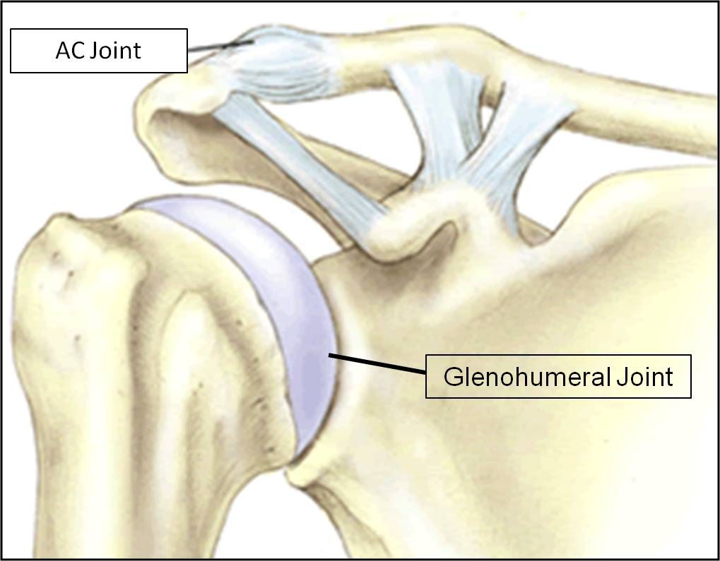 AC Joint | Anatomy | Pinterest | Rotator cuff and Physical therapy