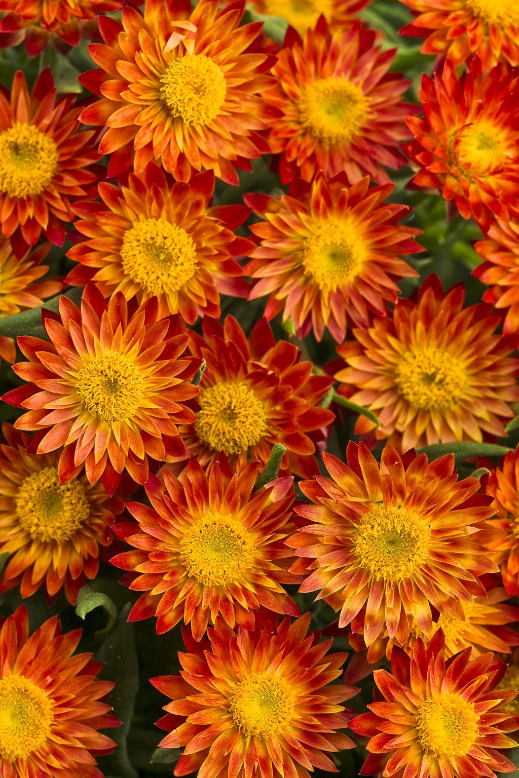 Pin By Debbie Story On Flowers Pinterest Plants Flowers And