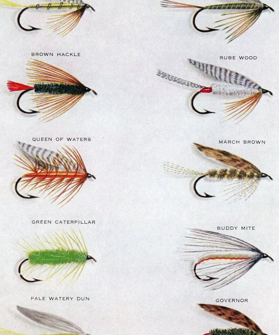 Vintage Print Trout Fishing Flies Art Illustration Wall Decor Double Sided Dry Flies Fly Fishing Flies Trout Fly Fishing Art Trout Fishing