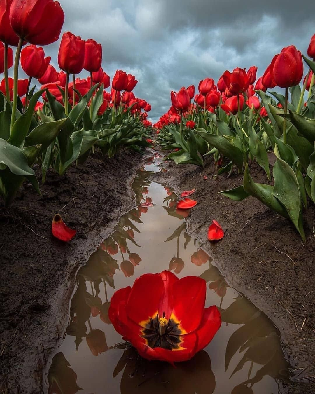 Qui Hic Minxerit Aut Cacaverit Habeat Deos Iratos In 2020 Beautiful Flowers Flowers Instagram