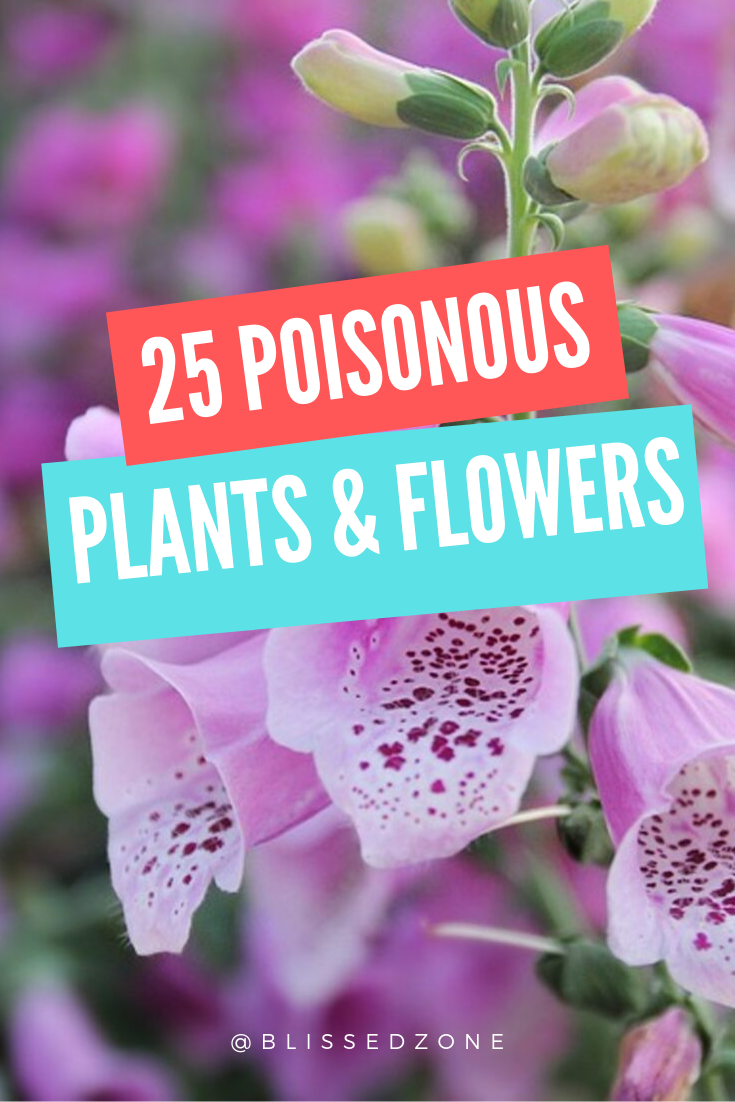 25 Poisonous Plants & Flowers You Might Have At Your House -   13 plants Flowers articles ideas