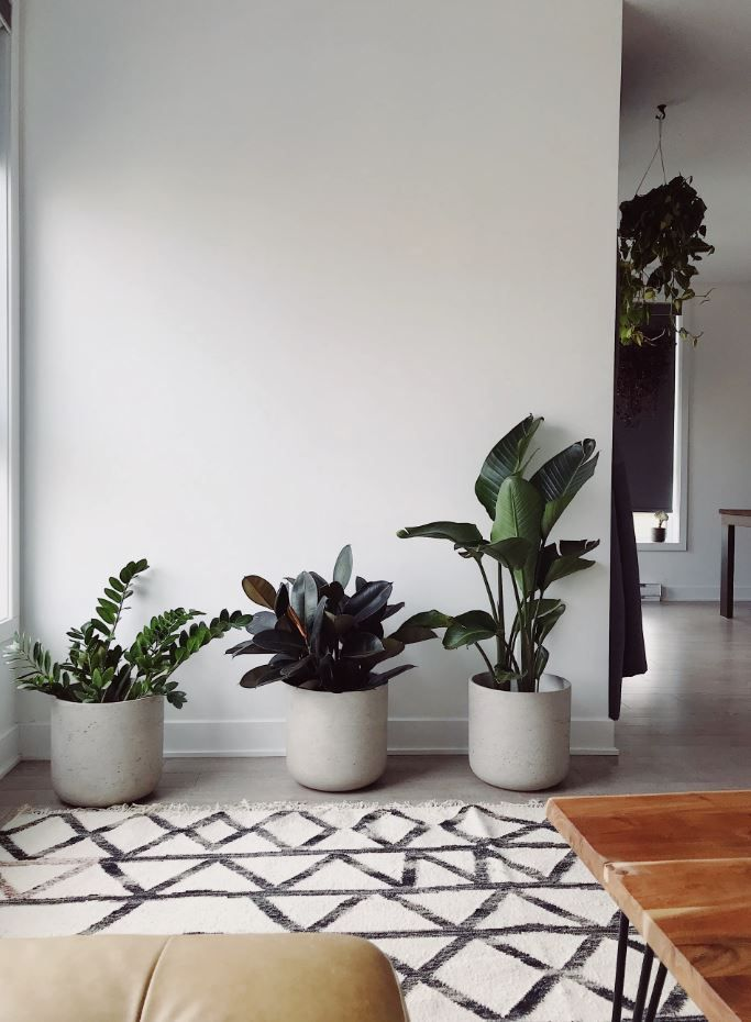 Pin On Decoration #plants #in #living #room #feng #shui