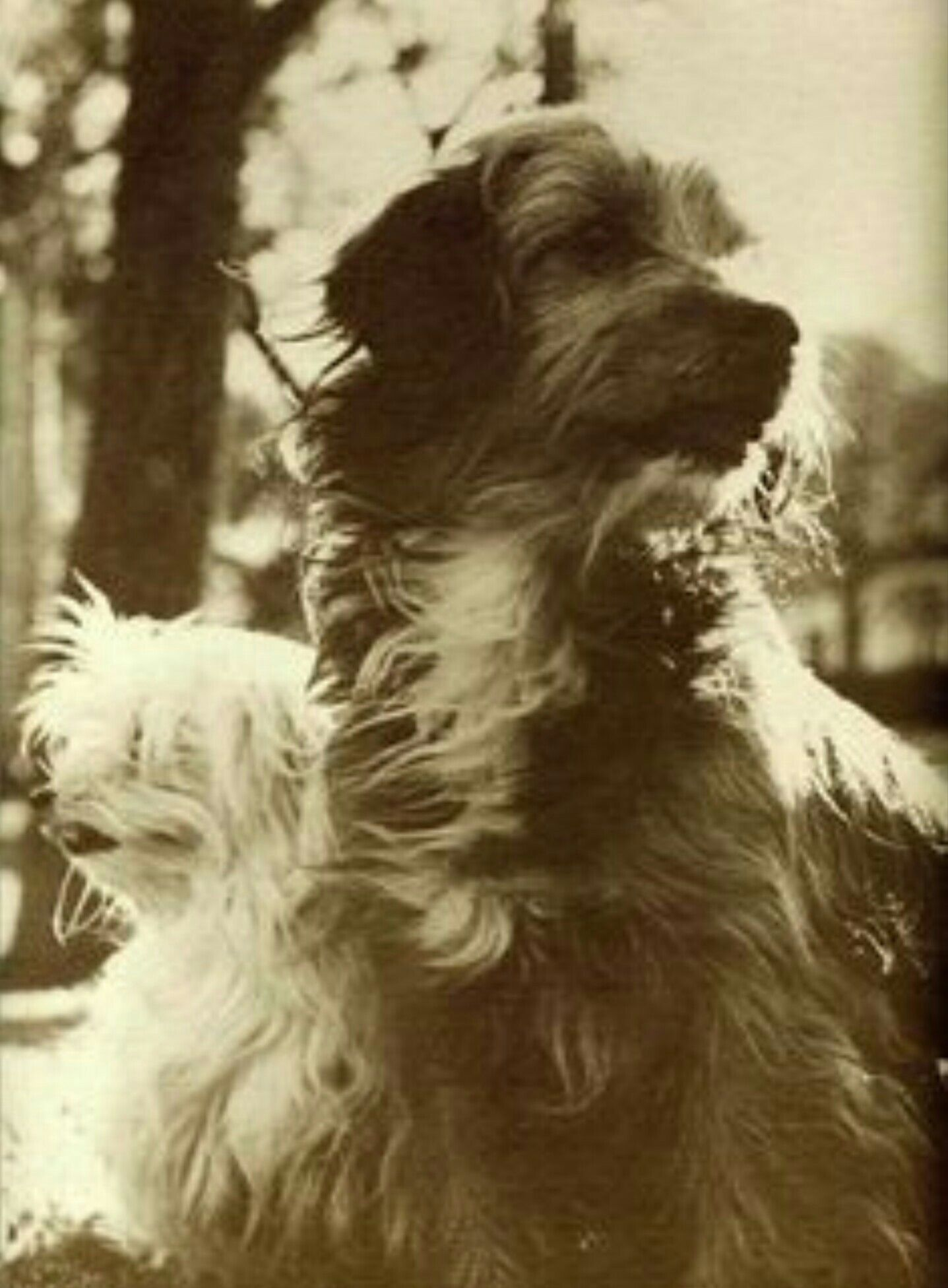 Benji With Tiffany 1974 Dog Movies Animals Beautiful Cute