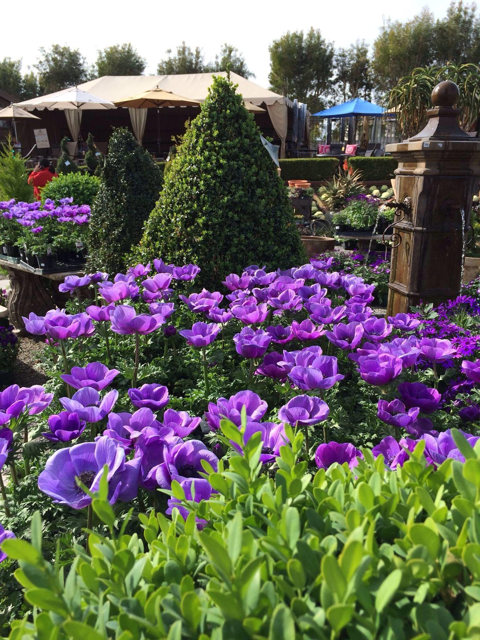 Rogers Garden, Newport Beach