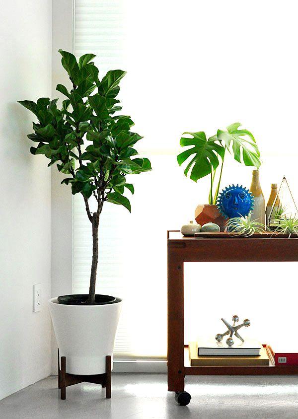 jewel planter with case study legs