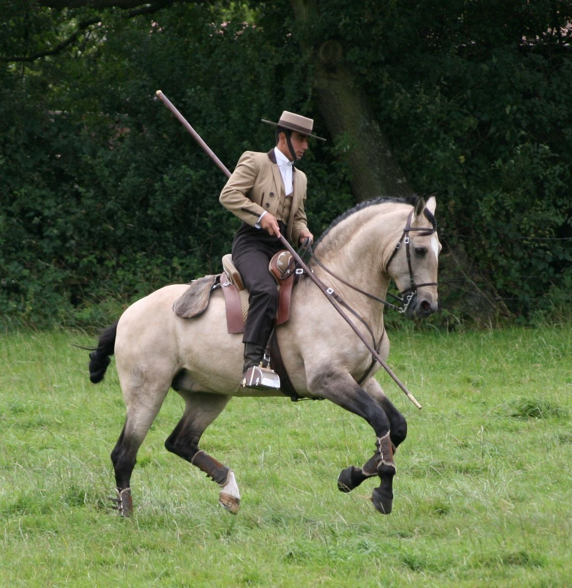 A Working Equitation horse and rider in traditional ...