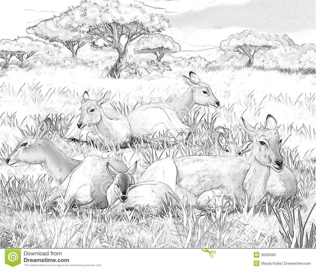 Free coloring pages landscapes - Coloring Pages Landscapes Cerca Con Google