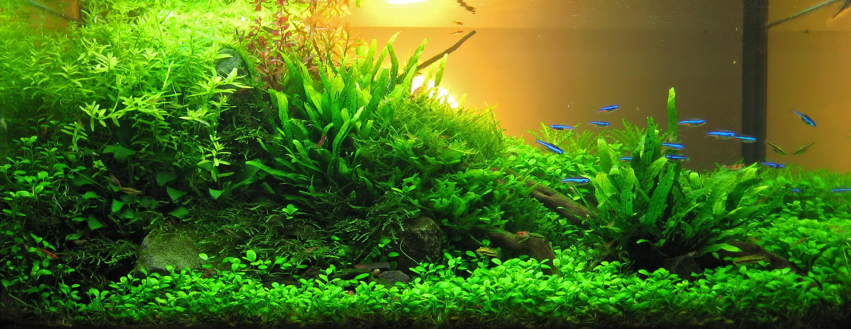Wonderful Aquascape Aquarium Designs: Simple Aquarium ...