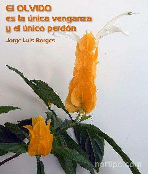 El olvido es la única venganza y el único perdón