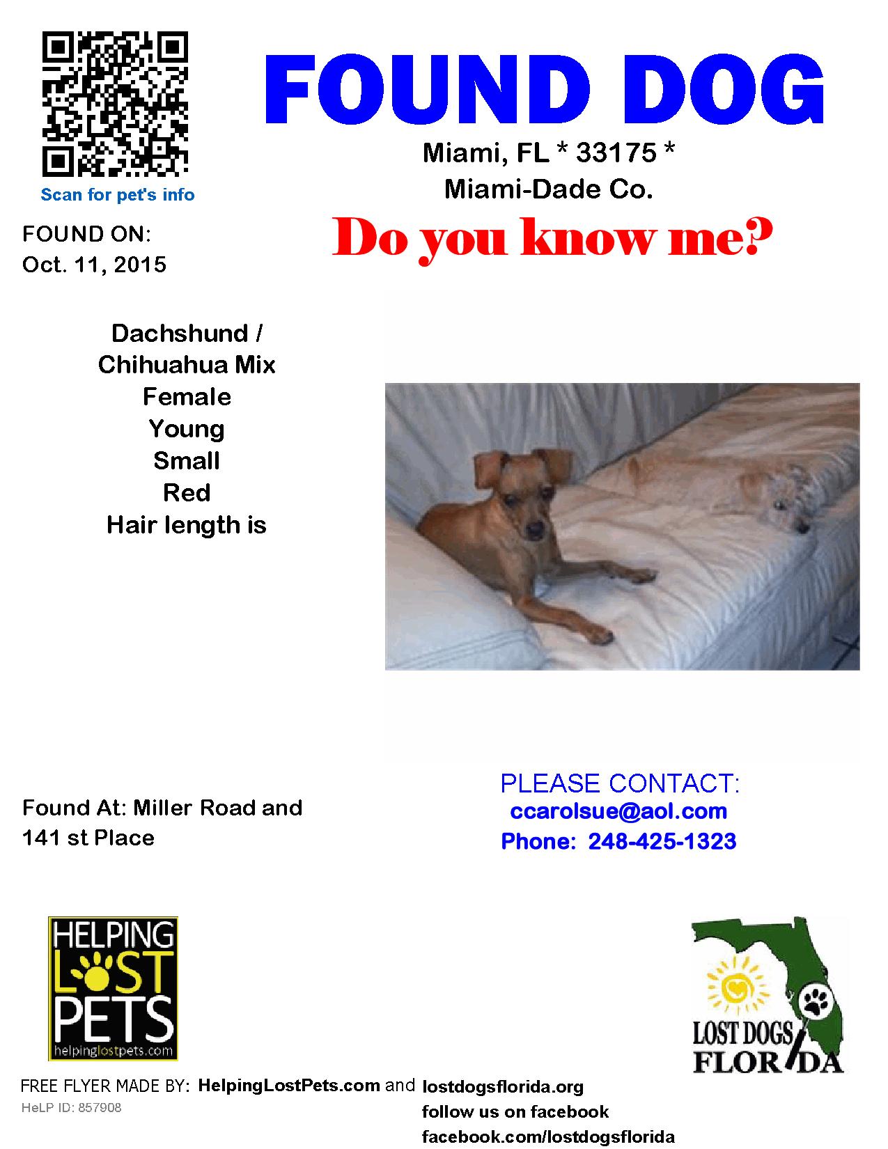 Found Dog Female Miami Fl Usa 33175 On October 11 2015 13