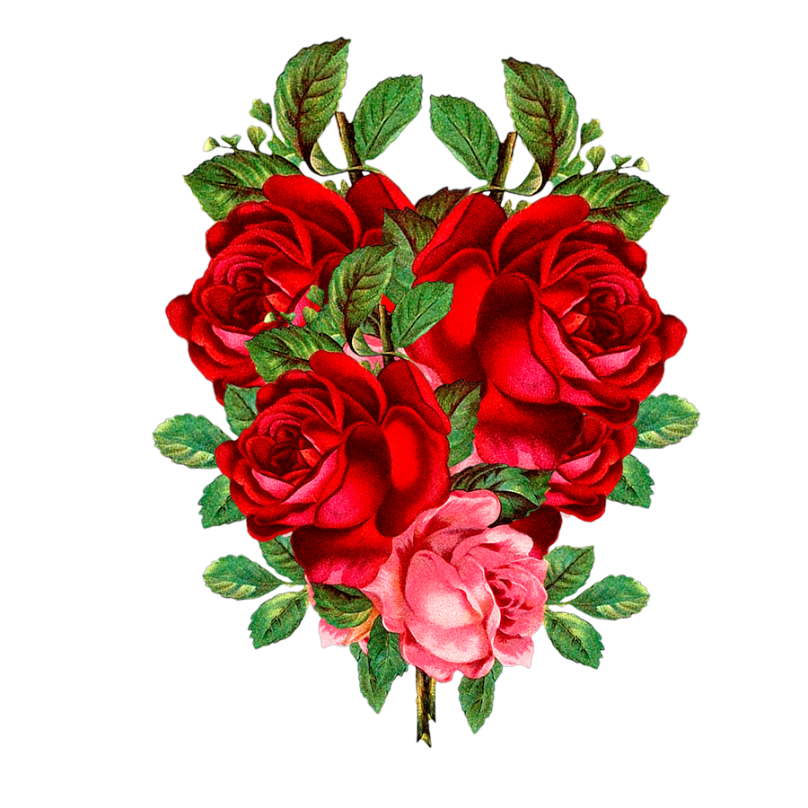 Free Download High Quality Red Rose Png Image Transparent Background It S Good Quality Red Flower Png Imag Flower Png Images Red Flowers Flower Bouquet Drawing