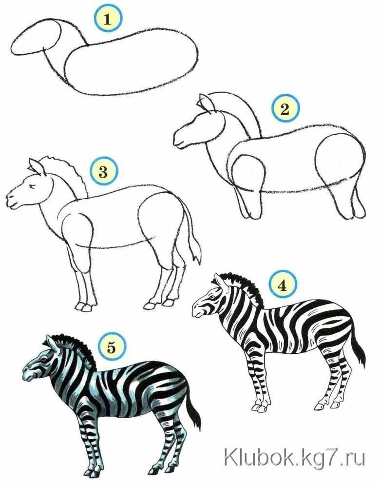 Животные для детей картинки поэтапно для начинающих