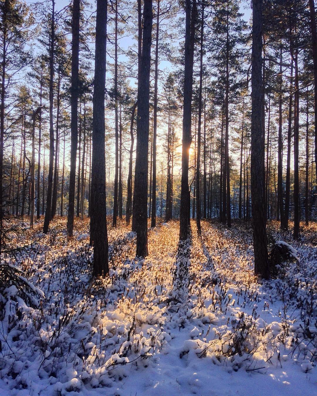 This made my day! The beauty of nature!  . . #outdoors #ig_gods #ig_week #igsweden #sweden #småland #skogen #thebestofscandinavia #winter #ig_week_sunsets #ig_week_scandinavia #tree_magic #forest_masters #wu_sweden #iphone5 #loves_sweden #igscadinavia #sweden_photolovers #ig_countryside #travelsweden #visiteksjö #visitsweden #folkgood by jennifer.sjogren