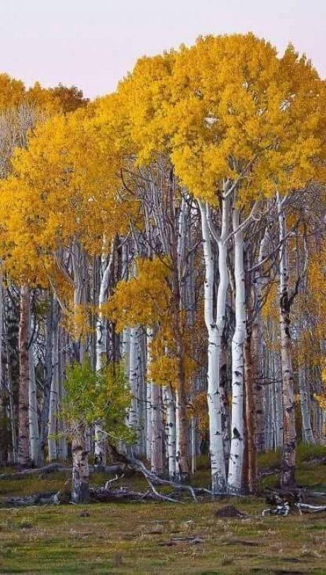 леса,луга и поля
