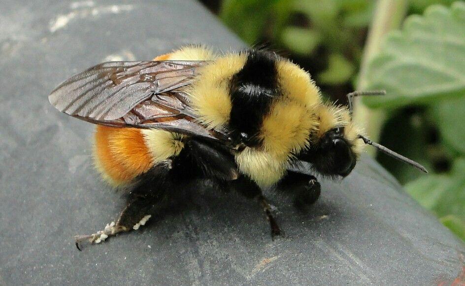 телеведущую толстая пчела фото красивые большие букеты