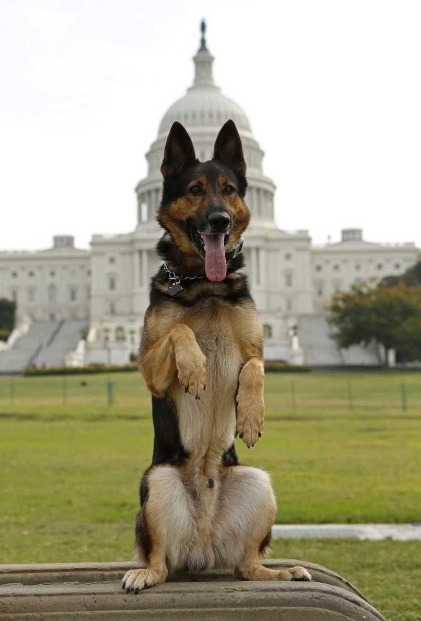 "Too cute Police dog ""Echo"" of the Lakeland, Florida"