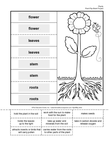 Science Booklet plant parts and their functions Science