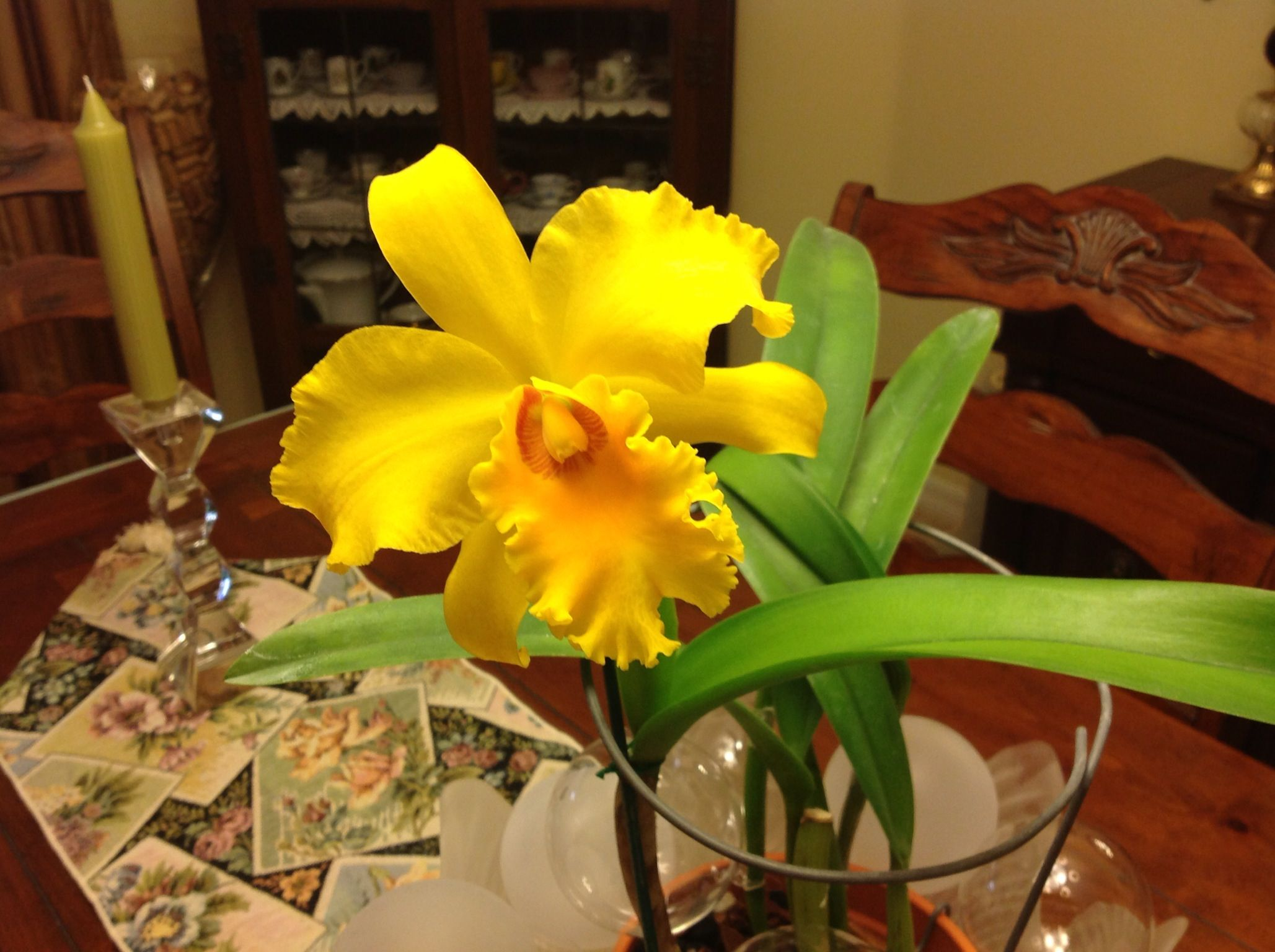 Yellow catleya orchids pinterest beautiful flowers plants and