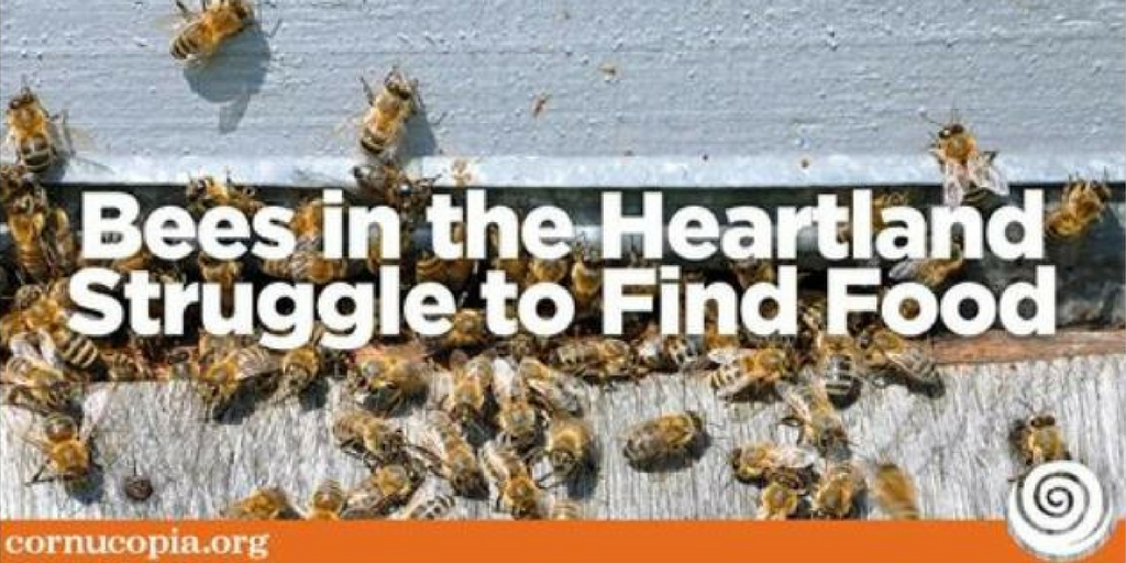 Beekeepers in North Dakota and Minnesota claim that farmers' move towards corn and soy, along with a decrease in conservation land, leaves bees without pollen. Cornucopia supports organic and sustainable farms, recognizing the far-reaching benefits of working with nature.