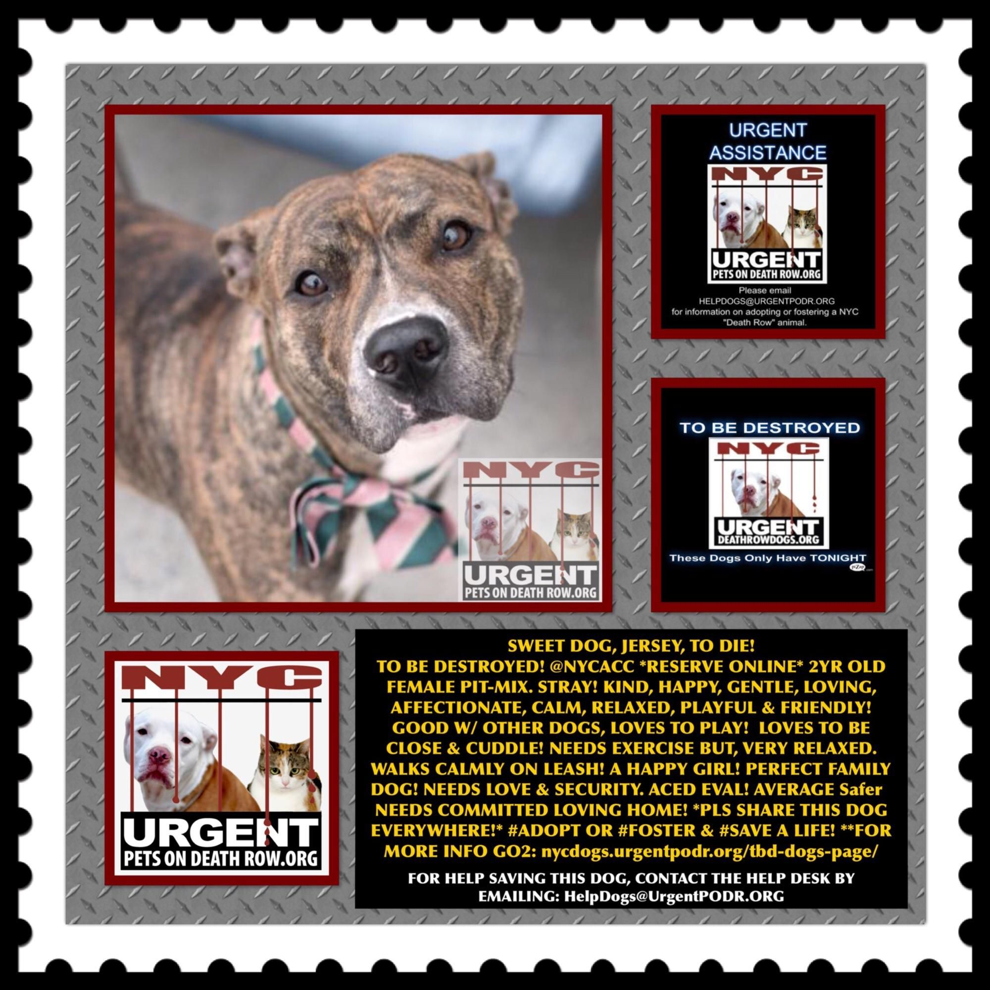JERSEY A1038029 Help us Save NYC AC&C Shelter Dogs