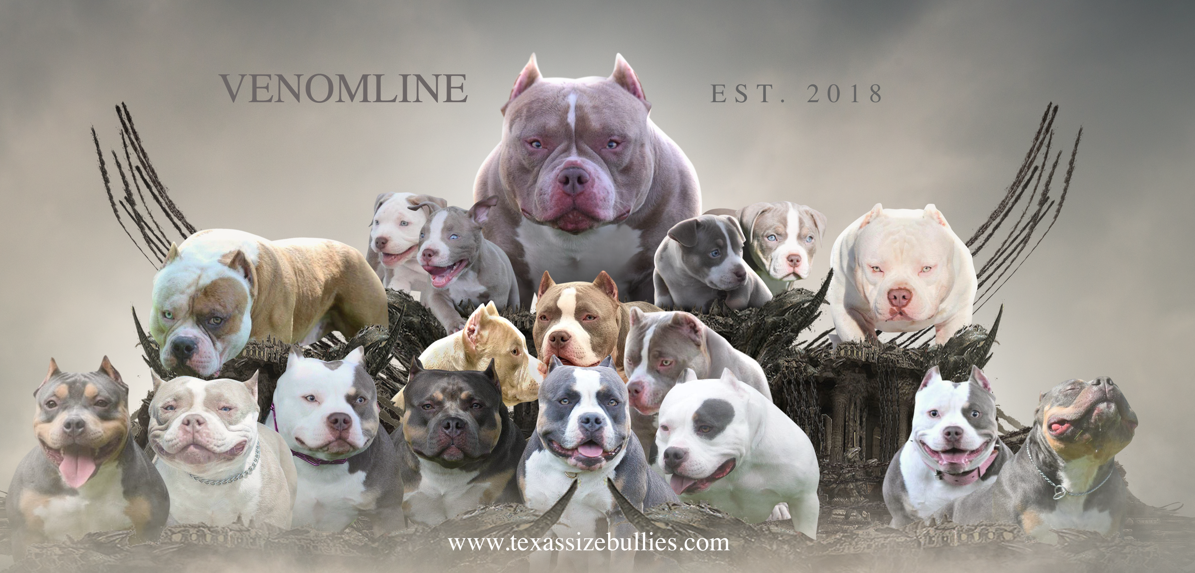 Becoming An American Bully Breeder In 2020 Pocket Bully American Bully Bully Breeds