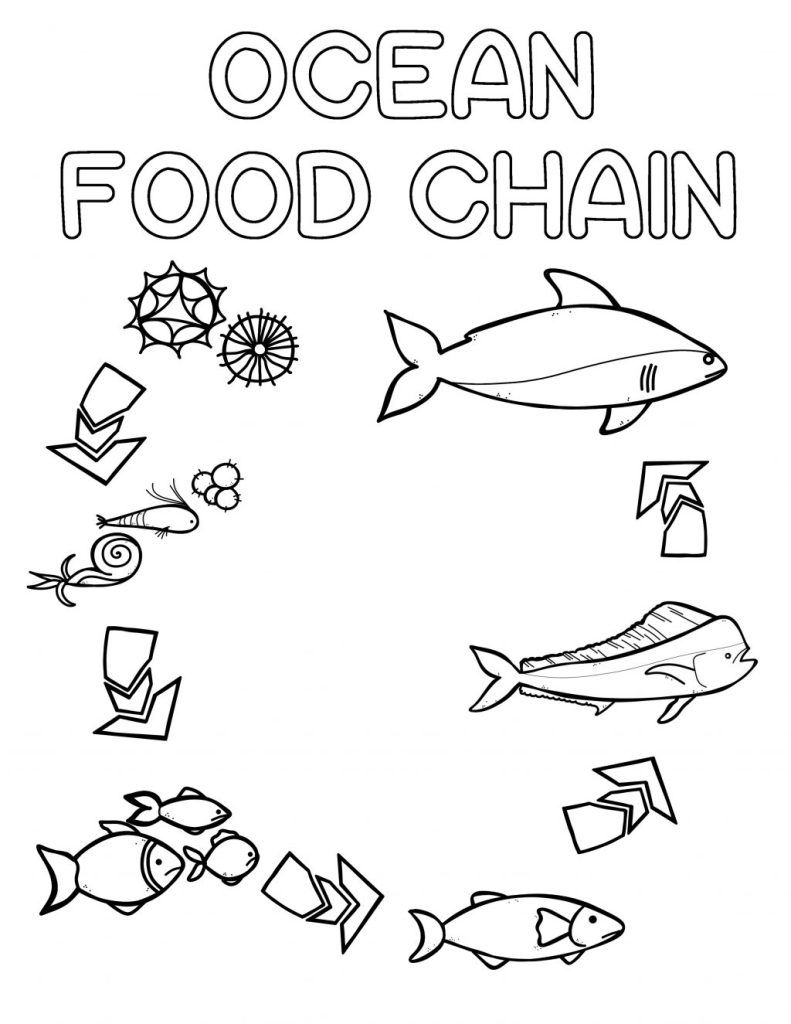 Ocean Food Chain Colouring Book Thrifty Mommas Tips Food Chain Worksheet Ocean Food Chain Ocean Food [ 1024 x 791 Pixel ]