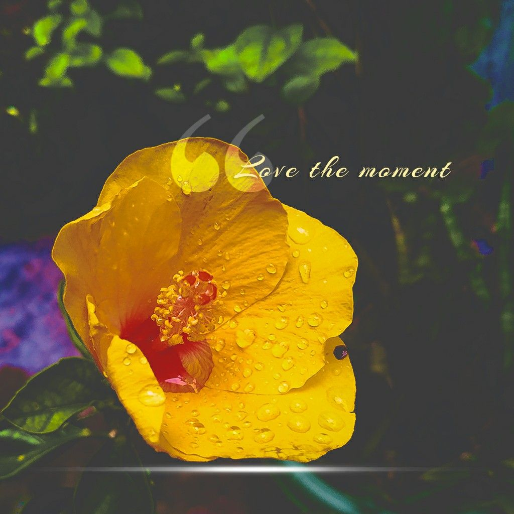 Love The Moment In 2020 Nature Quotes Flower Quotes Nature