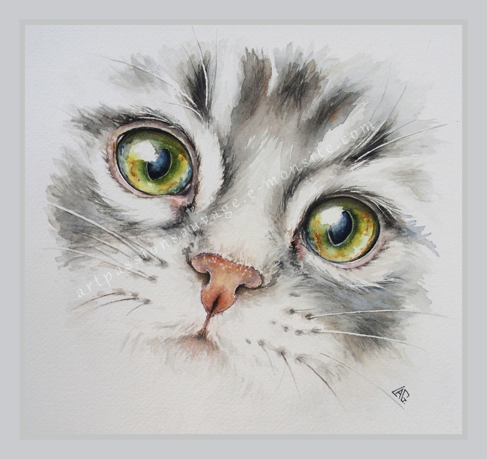 Aquarelle Chat Blanc 16 X 22 Cm Peintures Par Isabelle