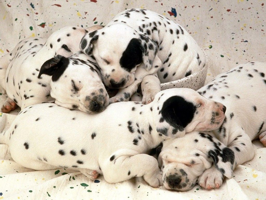 o da puppies!!!!!