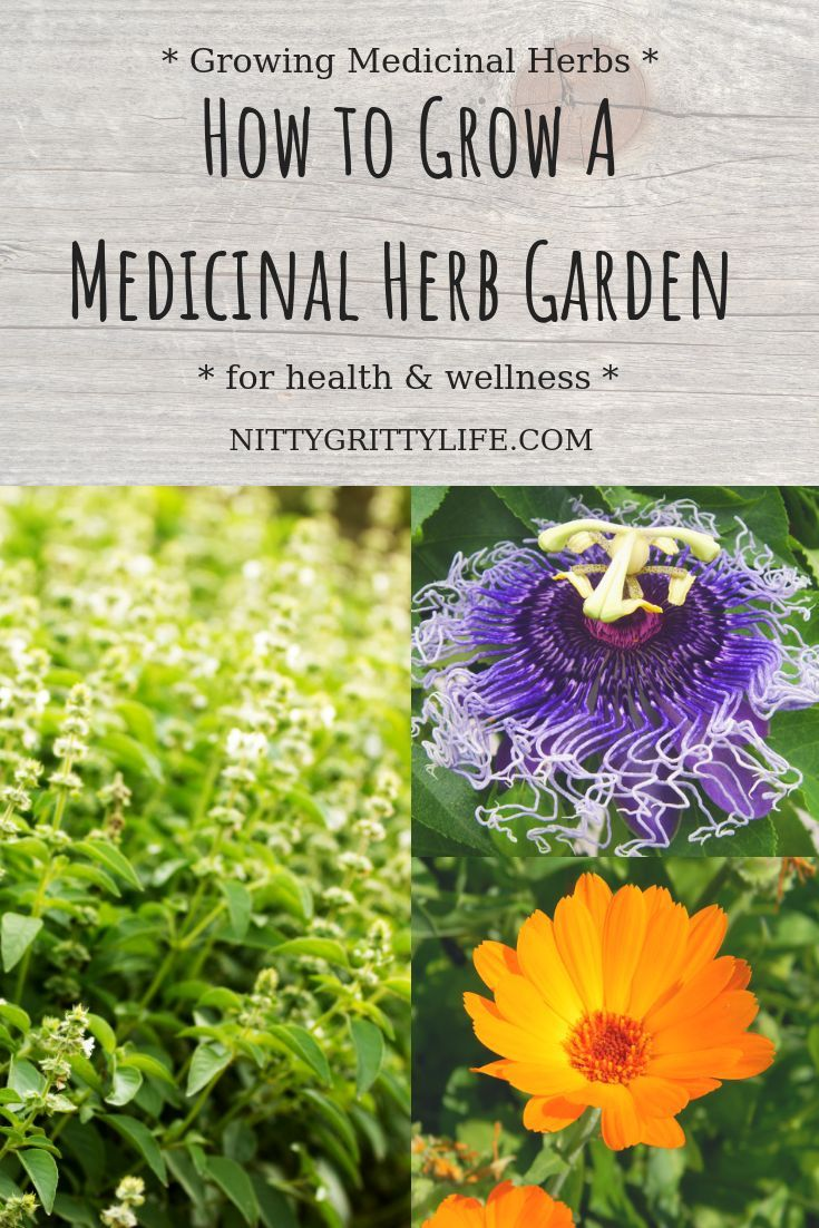 Growing A Medicinal Herb Garden For Health Wellness Herb