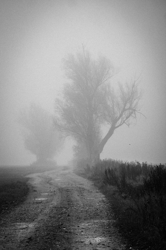*INTO THE MIST