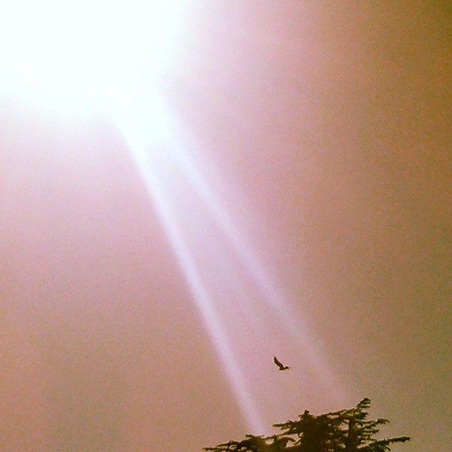 Playful  #minimalism #blackandwhitephotography #bird #flying #sky #sunbeam #crow #sunshine #treetop #Sun #tree #bestshotever @LGUSAMOBILE