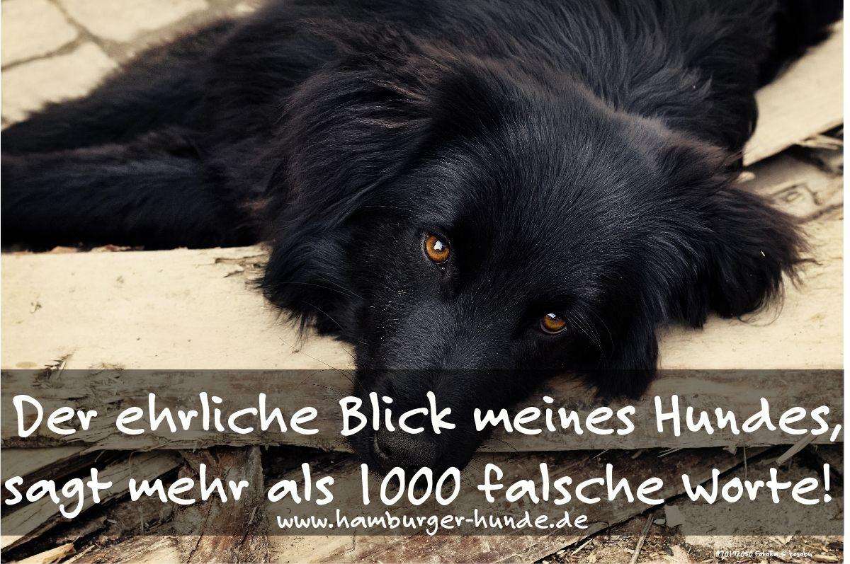 Der ehrliche Blick meines Hundes, sagt mehr als 1000 falsche Worte!