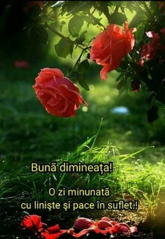 Sofian Elena Google Guten Morgen Und Rumänisch