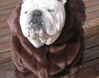 Determine Even More Details On Bulldogs Look At Our Site
