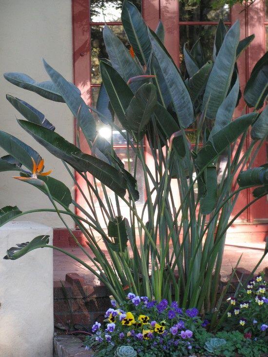 Tropical Landscape Design, Pictures, Remodel, Decor and Ideas - garten blumen gestaltung