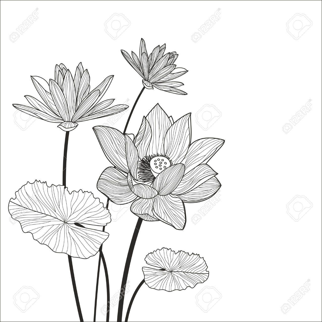 42912973 Beautiful Lotus Flower Line Illustration Vector Abstract