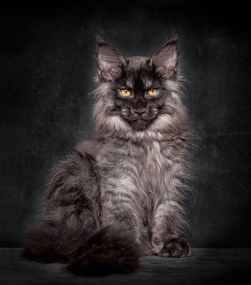 Мистические коты фото